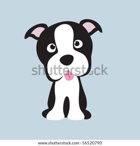 jpeg Boston terrier pup - stock photo