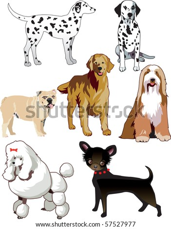 JPG Raster Illustration of 7 dogs or puppies isolated. Also available as a vector. - stock photo