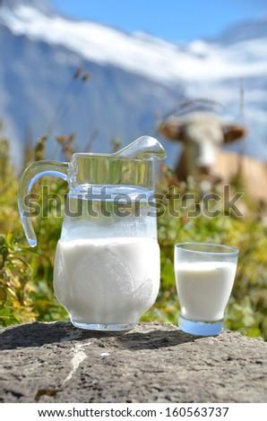 Jug of milk against herd of cows. Jungfrau region, Switzerland  - stock photo