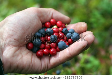 juicy berries blueberries and cranberries - stock photo