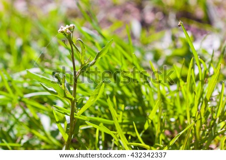 juicy green grass on the lawn, natural background - stock photo