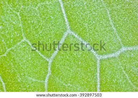juicy green plant cells under the microscope - stock photo