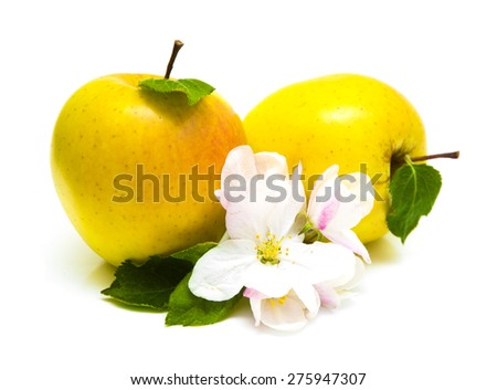 Juicy yellow apples isolated on white background - stock photo