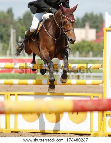 Jumping beautiful horse - stock photo