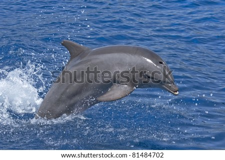 Jumping dolphin - stock photo
