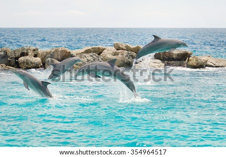 Jumping dolphins in the blue sea - stock photo