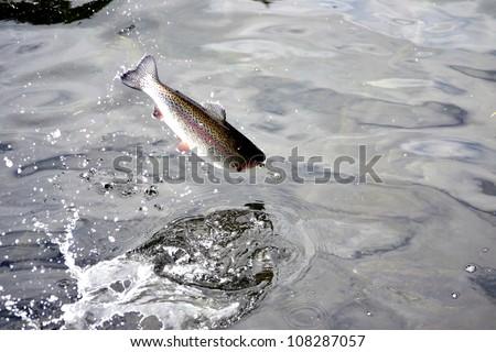 Jumping Fish - stock photo