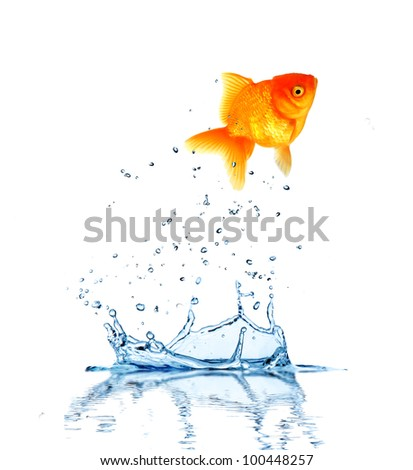 Jumping fish out of water, concept of challenge. Isolated on white background - stock photo