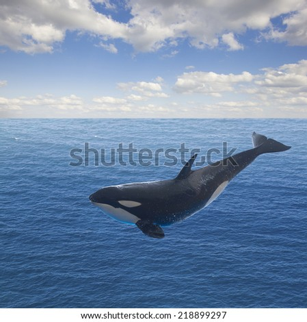 jumping killer whale, seascape with deep  ocean  waters and cloudscape - stock photo