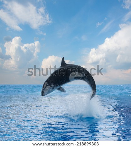 jumping killer whale, seascape with  ocean  waters and cloudscape - stock photo