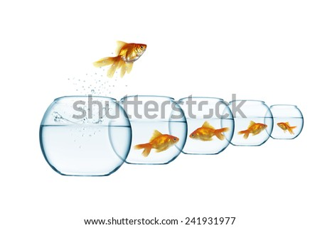 jumping out fish from aquarium on white background - stock photo