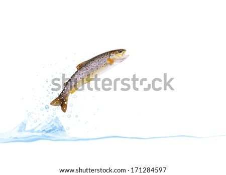 jumping out from water on white background trout - stock photo