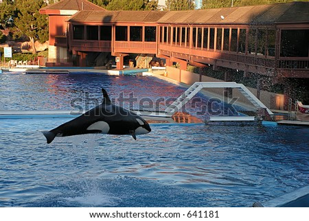 jumping whale - stock photo