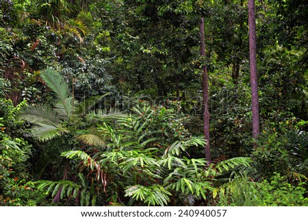 Jungle Background - stock photo