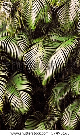 Jungle background of tropic rain forest tree and leaf. - stock photo