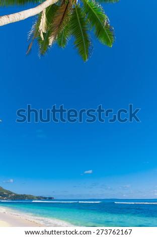 Jungle Bay Tranquility  - stock photo