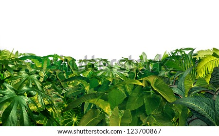 Jungle Border as a horizontal tropical plant design element with ferns and palm tree leaves found in southern hot climates as south America  Hawaii and Asia isolated on white. - stock photo
