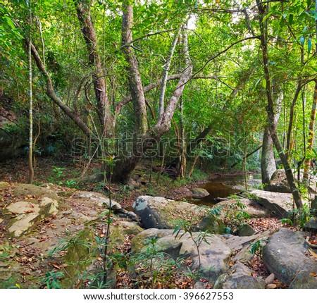jungle Cambodia kampuchea. - stock photo
