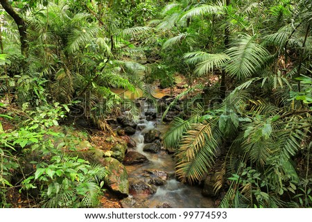 jungle creek, Daintree National Park, Queensland, Australia - stock photo