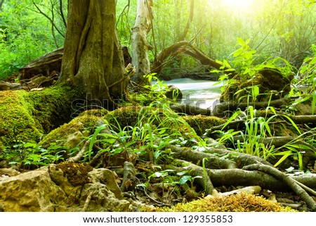 Jungle forest - stock photo