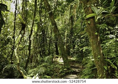 jungle in Bolivian pre-mountain rainforest in Parque Carascu jungle trees evergreen humid forest - stock photo