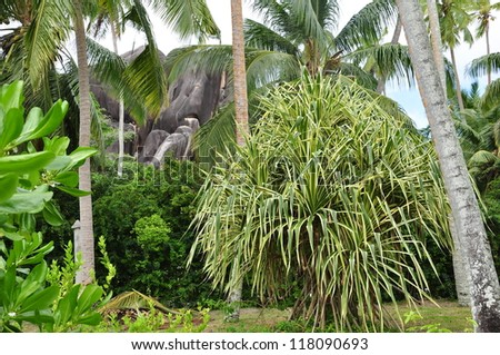 jungle, la Digue, Seychelles - stock photo