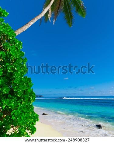 Jungle Landscape Panorama  - stock photo