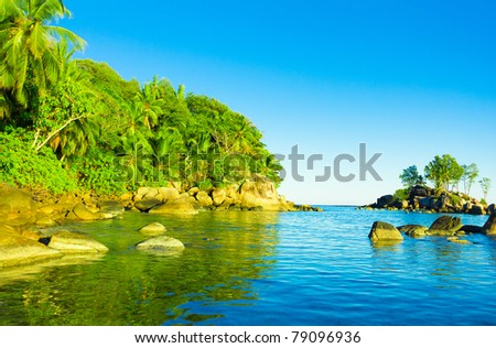 Jungle Palms Shore - stock photo