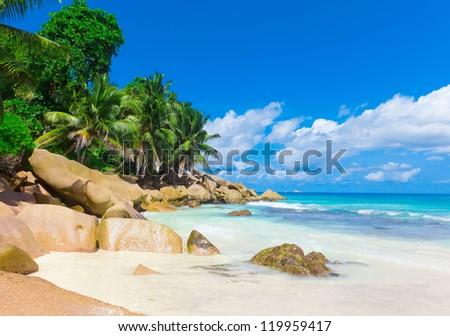 Jungle Panorama Sea - stock photo