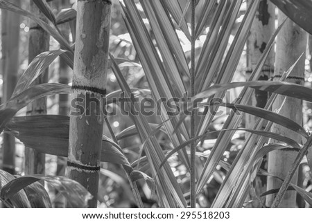 Jungle scene of dense plant growth in the center of the rain forest in tones of black, white, and gray tones. - stock photo