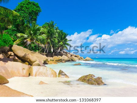 Jungle Shore Summertime - stock photo
