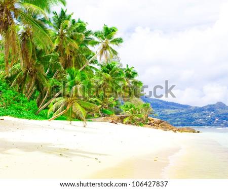 Jungle Summertime Palms - stock photo