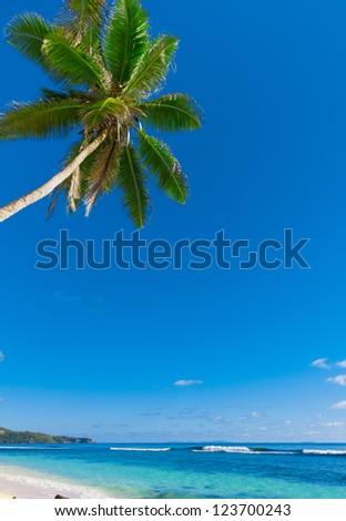 Jungle Tranquility Panorama - stock photo
