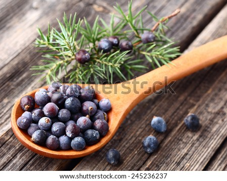 Juniper on a wooden background - stock photo