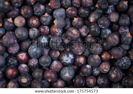 Juniper seed - stock photo