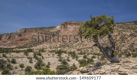 Juniper tree at the San Rafael Swell in Emery County Utah showing Cedar  Mountain in the background. - stock photo