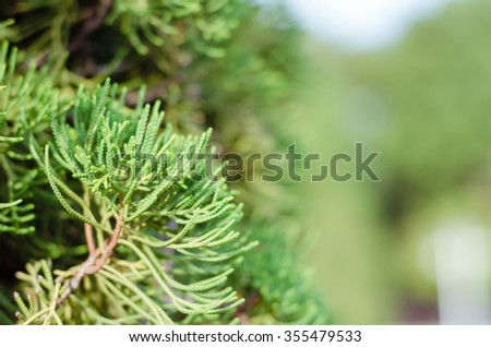 Juniper Tree In Winter Foggy Morning (soft focus background). - stock photo