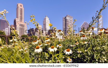 Juxtaposition of urban and nature.  A garden of daisies against a background of the Chicago city skyline. - stock photo