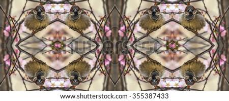Kaleidoscopic pattern of angry sparrow on sakura tree - stock photo