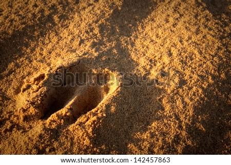Kangaroo's paws marks on the Pinnacles desert sand in Western Australia. - stock photo
