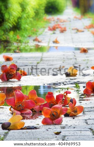 Kapok on the ground. - stock photo