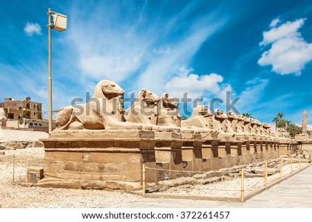 Karnak Temple in Luxor, sphinx - stock photo