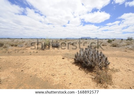 Karoo Landscape showing adaptive vegetation.  The karoo is a vast semi desert region prone to drought. Once a prehistoric inland sea, it  rich in fossils and has a unique adapted vegetation,  - stock photo