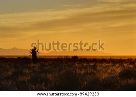 karroo sunrise,blouboskuil,graaf reinet,eastern cape,south africa - stock photo