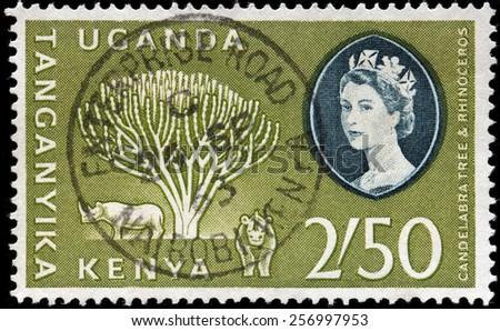KENYA, TANGANYIKA, UGANDA - CIRCA 1960: A stamp printed by KENYA, TANGANYIKA, UGANDA (East African Community) shows Candelabra Tree and two Rhinoceros, circa 1960 - stock photo