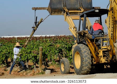 KERN COUNTY, CA -  OCTOBER 10, 2015: Aided by a backhoe, farm workers tear out supports and grape plants in this old vineyard. Later, it will be replanted. - stock photo