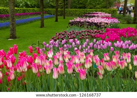 Keukenhof garden, Holland - stock photo
