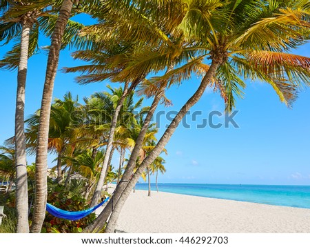 Key west florida Smathers beach palm trees in USA - stock photo