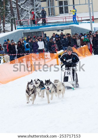 Kharkiv, Ukraine-Feb 7, 2015: Sled Dog Race in Kharkiv, Ukraine - stock photo