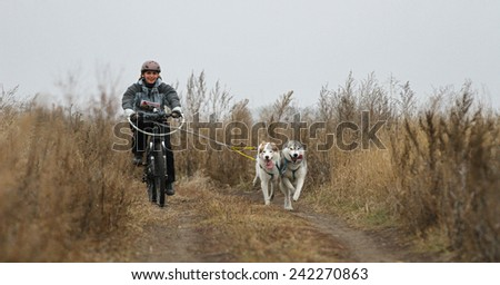 Kharkov, UKRAINE - November 15, 2014: Irina Kasinova at Bikejoring with two dogs Women's 3100 m at Sled dogs dry land race Autumn Cup - 2014 - stock photo